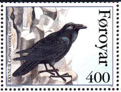 Corvus Corax 2